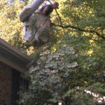 Carolina Tree Works Rock Hill SC Limb Removal