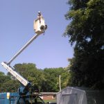 Carolina Tree Works Rock Hill SC Professional Tree Care